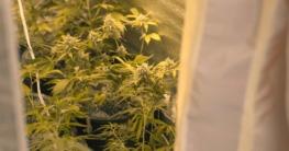 Pflanzen in der Growbox